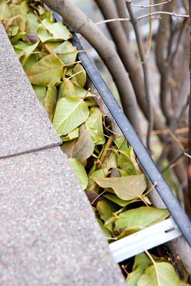 Leaves clogging upguttering
